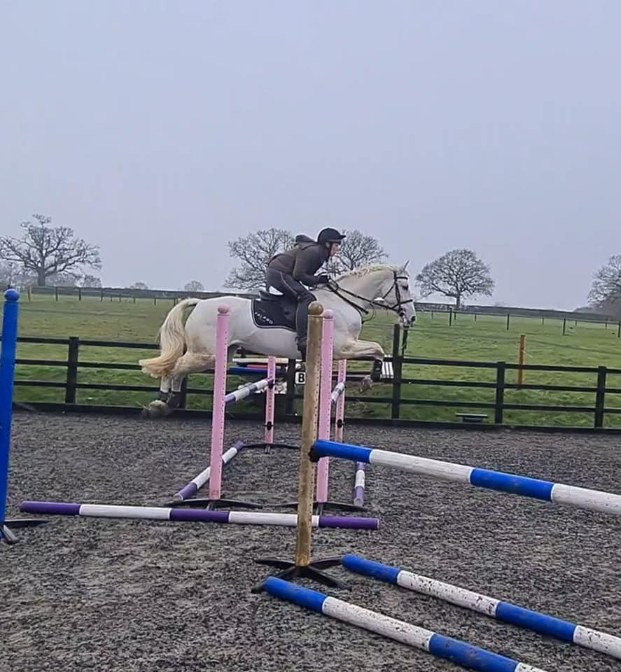 New Competition Horse - Ziggy